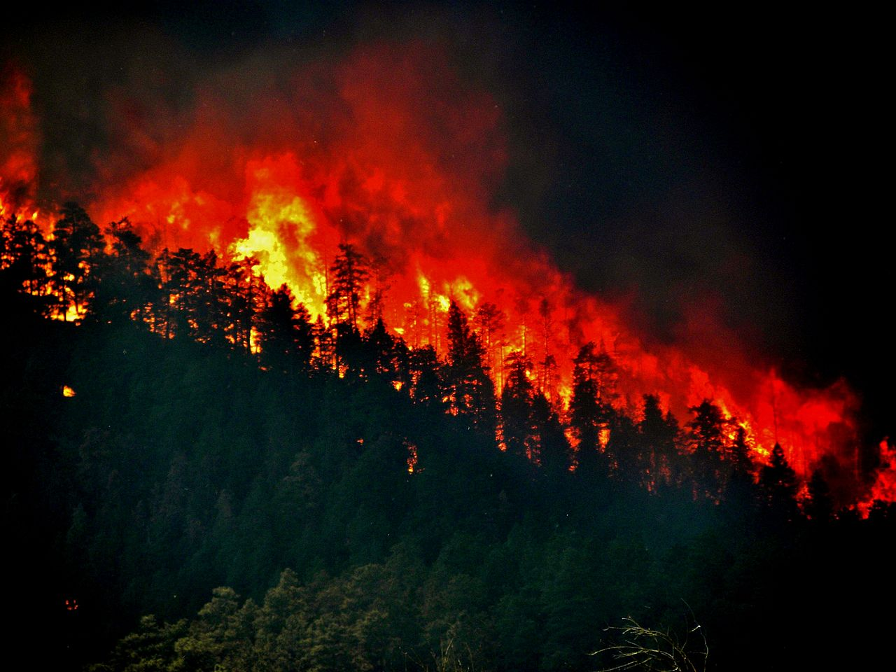 1280px-Trees_torching_-_High_Park_Wildfire